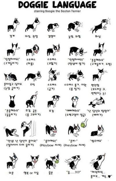 《小狗30種身體語言》看小狗的這些動作~就知道牠在表達什麼了♡