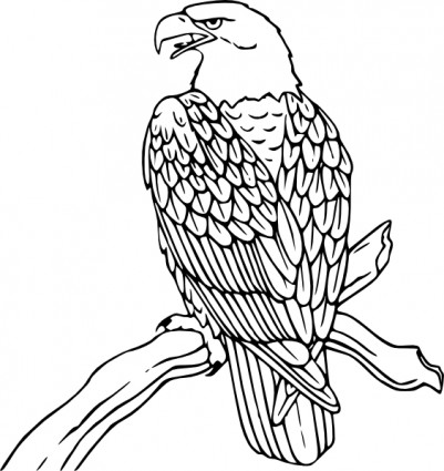 820 Koleksi Download Gambar Burung Elang Vektor Gratis Terbaik