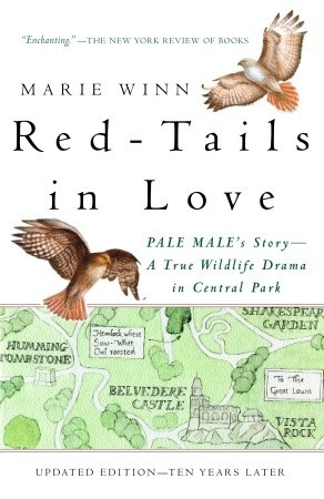Red-tails in Love: Pale Male's Story—A True Wildlife Drama in Central Park
