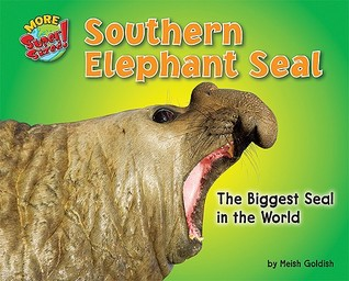 Southern Elephant Seal: The Biggest Seal in the World