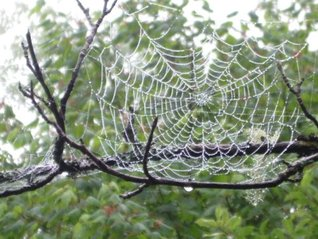 Gossamer Threads to Catch the Soul: Spiritual Reflections for the Church Year