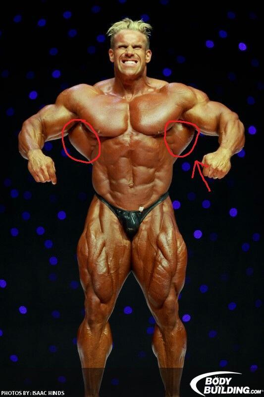 Wie Heien Diese Muskeln Bilderlink In Beschreibung