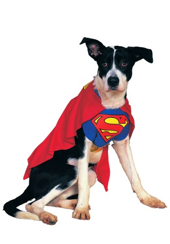 superdog, dog halloween costume