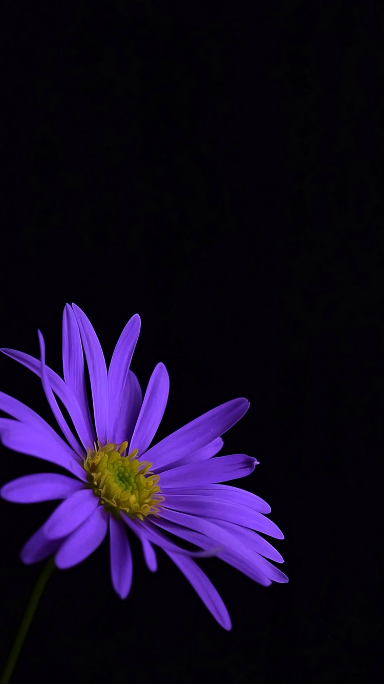 750x1334 Purple Flower Blossom Iphone 6 Iphone 6s Iphone 7 Hd 4k Wallpapers Images Backgrounds Photos And Pictures