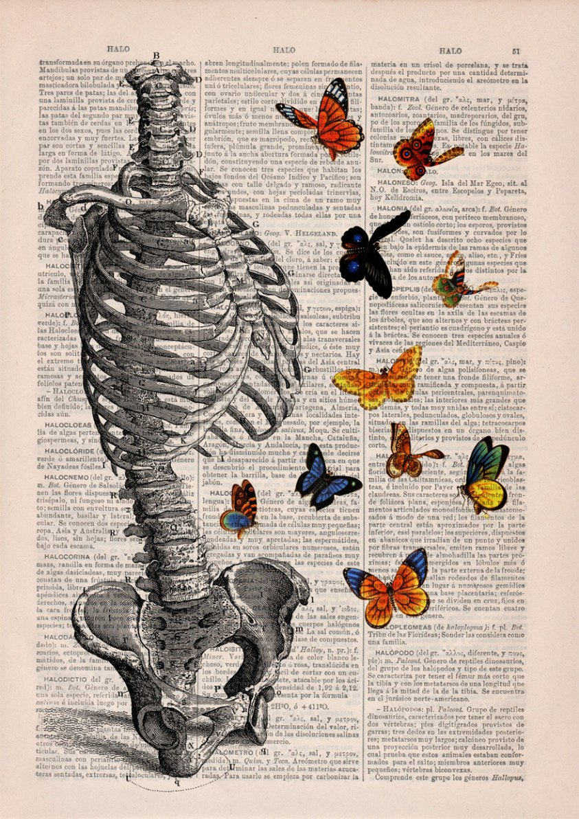 These anatomical drawings on old book pages are so ...