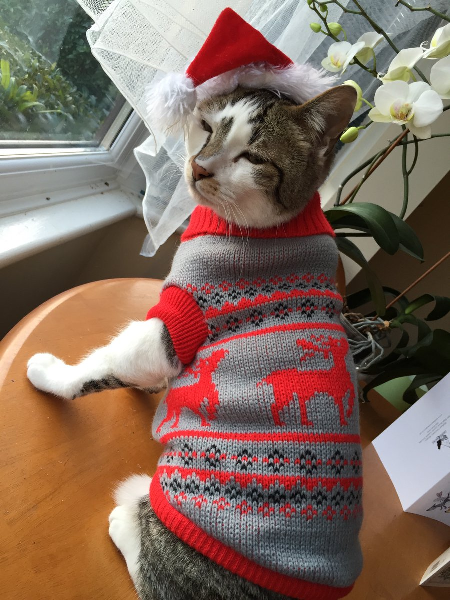 People Are Dressing Cats In Adorable Christmas Sweaters