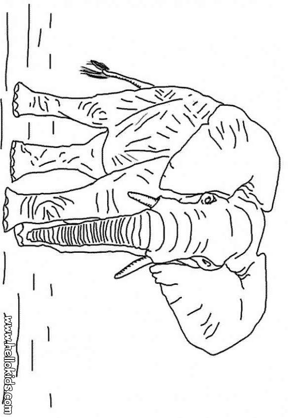 african animals coloring pages 44 all the wild animals of the