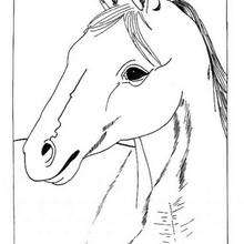 horse coloring pages horse head