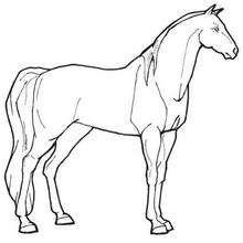 two horses hoofed horse little horse horse rider horse head work