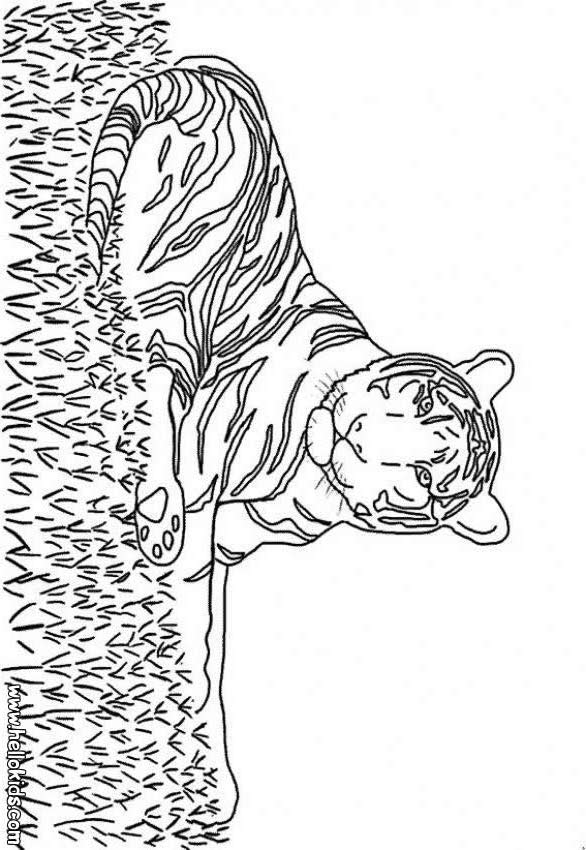 tiger pictures to color pictures of tiger