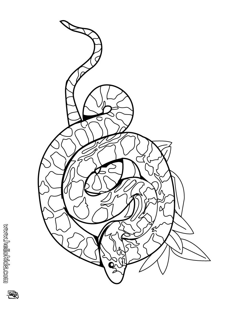 cute rattlesnake coloring page snake coloring pages rattle snake