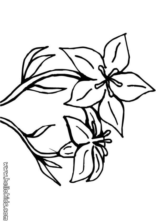 flower coloring pages lily flower