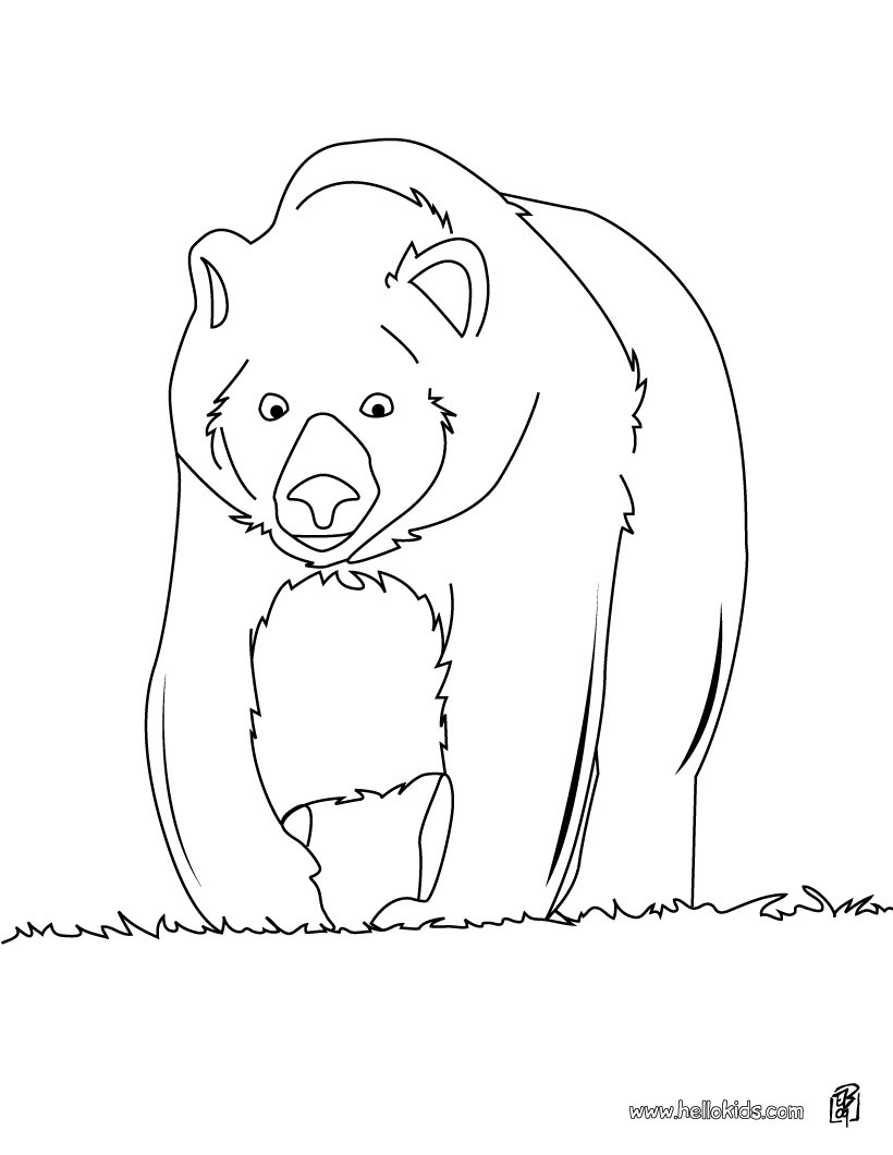 forest animals coloring pages big brown bear