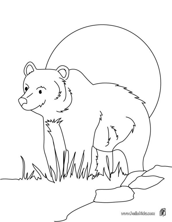 black bear coloring page # 9