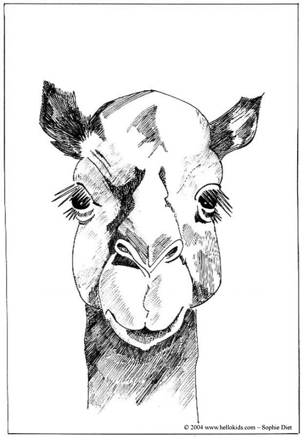 african animals coloring pages dromedary head