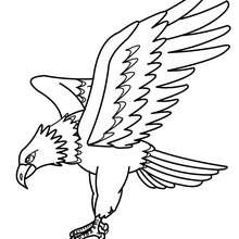 bird coloring pages macaw