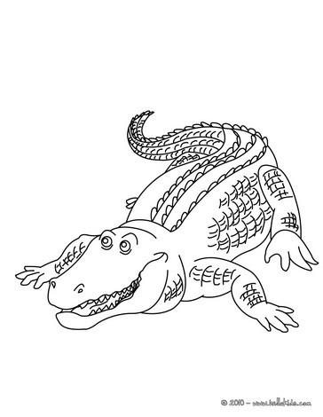 alligator coloring pages alligator