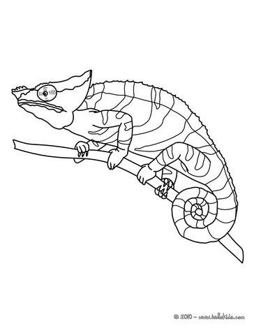 chameleon coloring pages chameleon printable