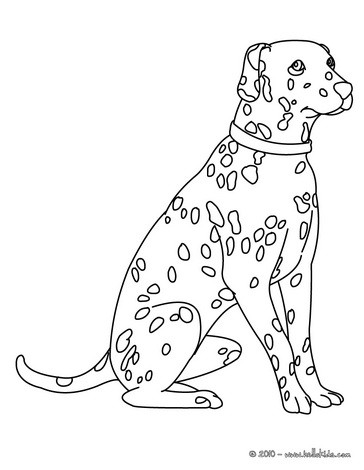 dog coloring pages dalmatian