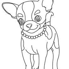 dog coloring pages husky