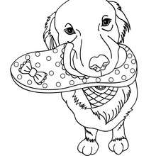 coloring pages dog # 47