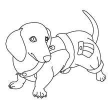 dachshund coloring pages # 1