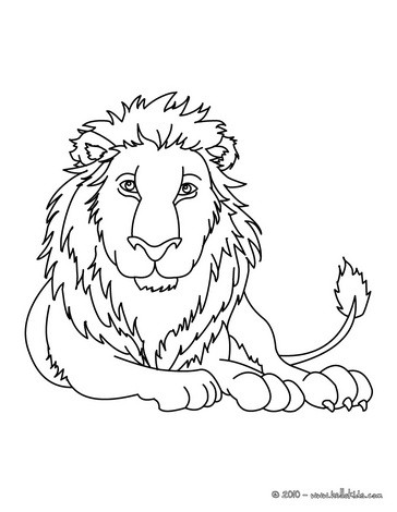 african animals coloring pages lion