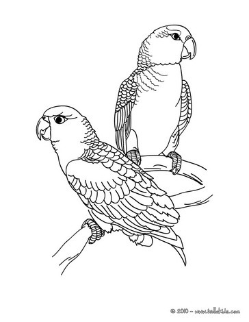 parrot picture coloring page