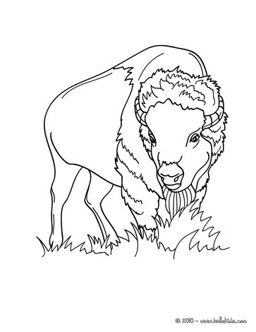 forest animals coloring pages 37 all the wild animals of the
