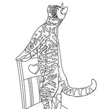 cat coloring pages cute cat