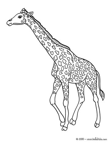 african animals coloring pages giraffe