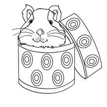 guinea pig coloring page # 24