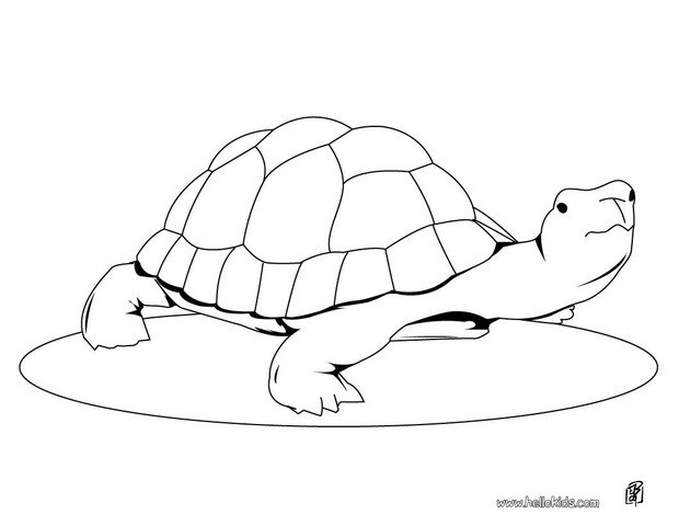 turtle coloring pages cute turtle