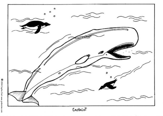 whale coloring pages sperm whale
