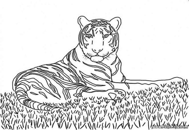 jungle animals coloring pages tiger