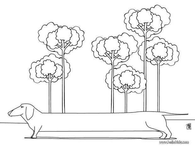 dog coloring pages dachshund