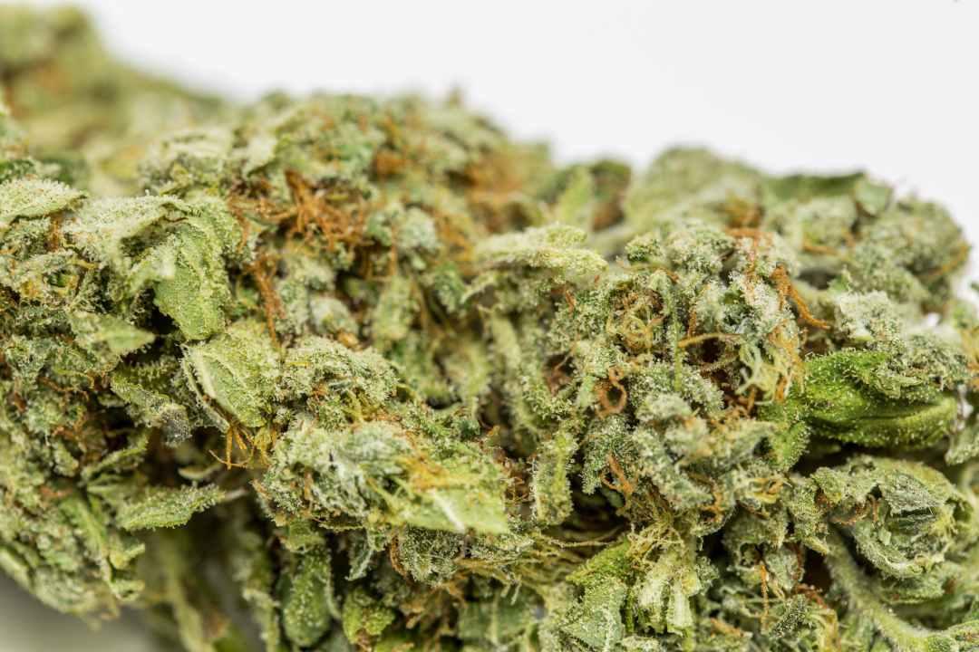 Ice Wreck Weed; Ice Wreck Cannabis Strain; Ice Wreck Hybrid Marijuana Strain