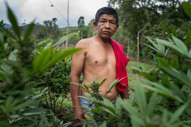 Nicolas Enriquez Marijuana   9 Aquaponics is the Future of Growing Weed