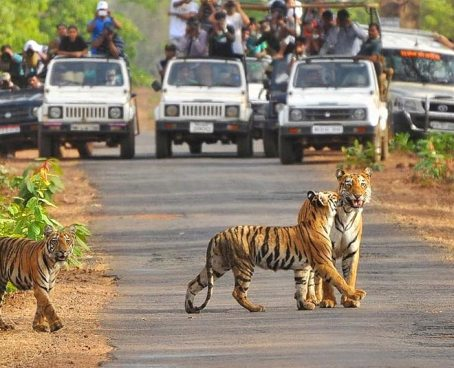 Planning To Go Jim Corbett National Park This Month