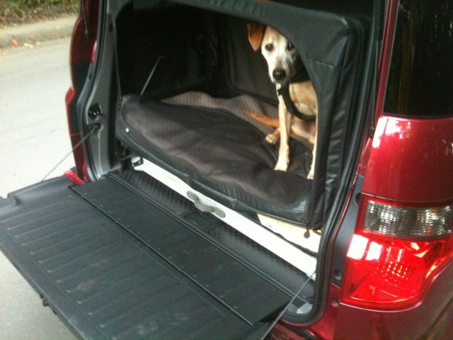 Tested 2010 Honda Element Dog Friendly Package