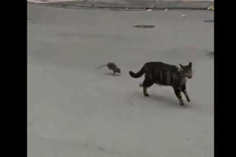 इस चूहे के सामने छूटे बिल्ली के पसीने, कुछ ऐसे Videos जिन्हें देखकर आपका दिन बन जाएगा