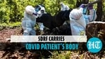 SDRF carries covid-19 patient's body