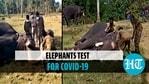 56 elephants in two camps undergo Covid tests in Tamil Nadu
