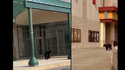 The images show the black bear spotted at the mall.