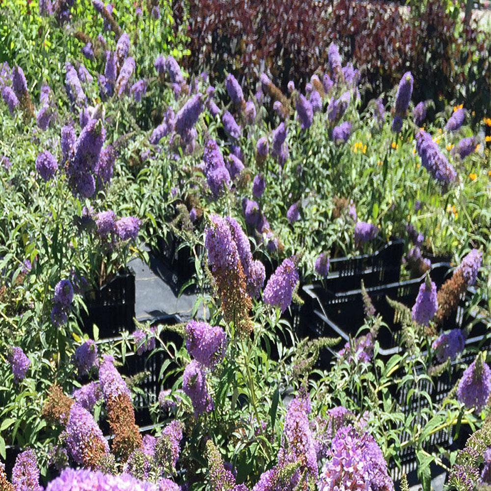 Blue Garden Center Outdoors The Home Depot