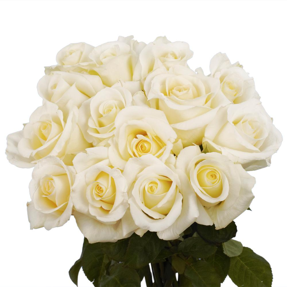 Globalrose Fresh White Roses Valentines Day Flowers 100
