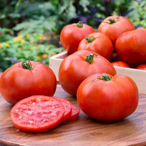 Resultado de imagen para tomato