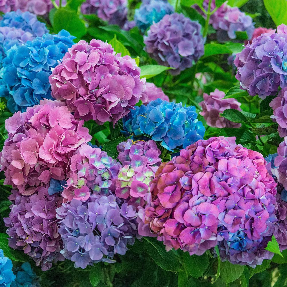 Assorted Colors Shrubs Bushes Plants Garden Flowers The