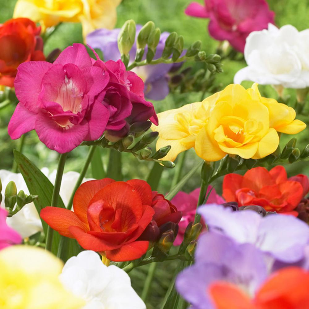 Flower Bulbs Garden Plants Amp Flowers The Home Depot