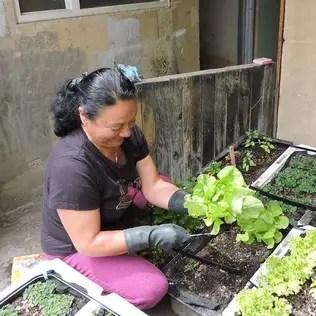Techos Verdes: Jardines de estilo clásico por Techos Verdes Productivos